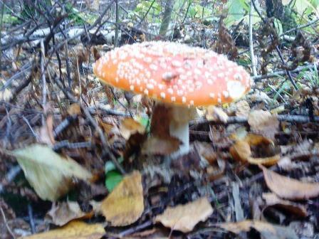За грибами в Подмоск...
