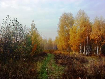 опасны ли клещи осенью 2