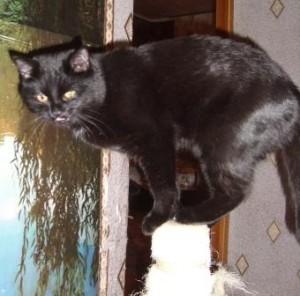 кошка в вашем доме 2