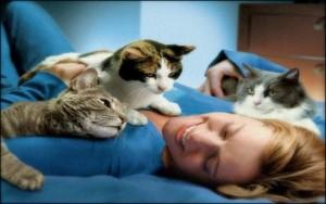 кошка в вашем доме 3
