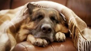 правильная дрессировка собаки
