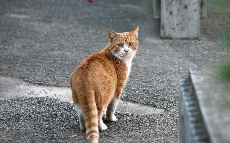 где можно взять котенка бесплатно 2