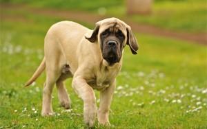 правильная дрессировка собаки 1