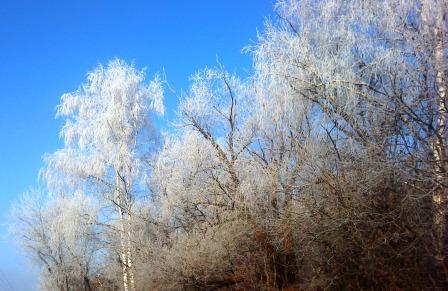 фото зимней природы