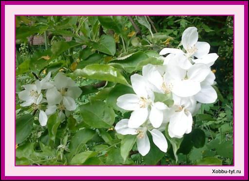 цветущий месяц май 2