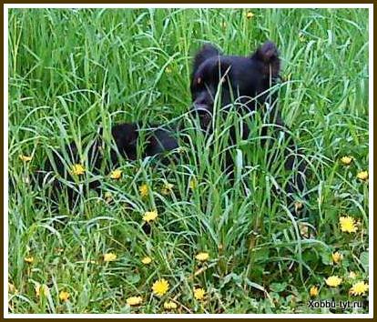 уход за кошками и собаками 7