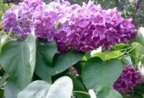 цветущий месяц май