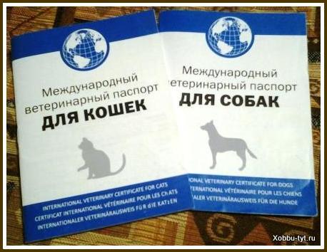 уход за кошками и собаками 8