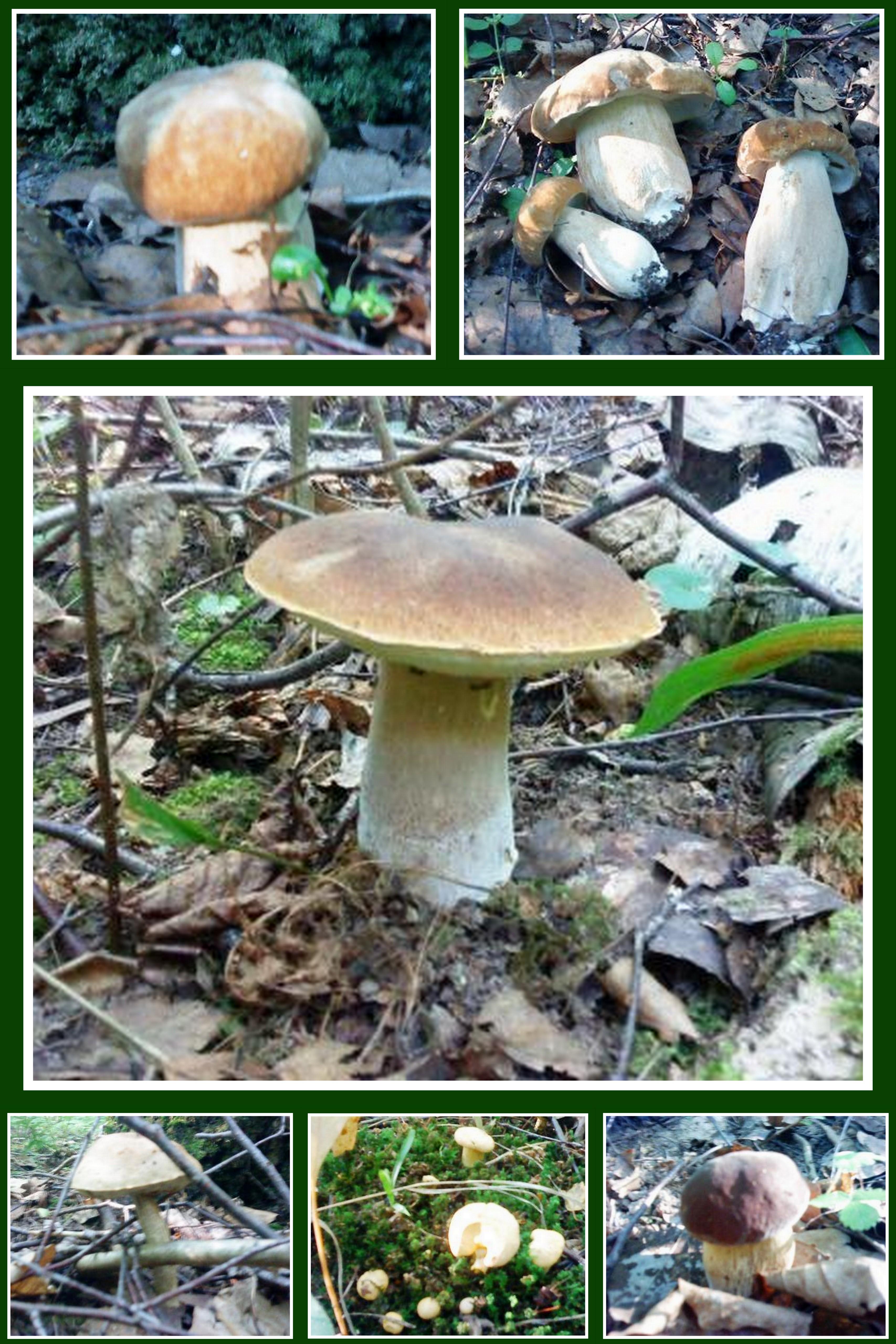 есть ли в июне грибы в лесу 3