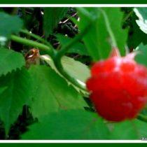 лето природа пейзажи фото 2
