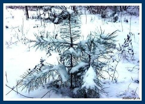 Красота  зимней прир...