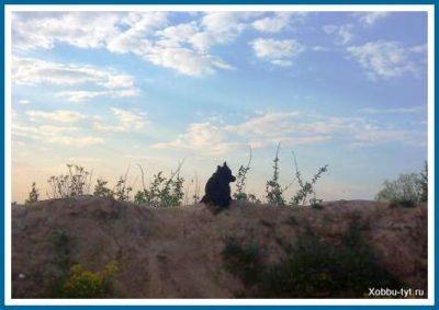 песчаные карьеры Подмосковья 6