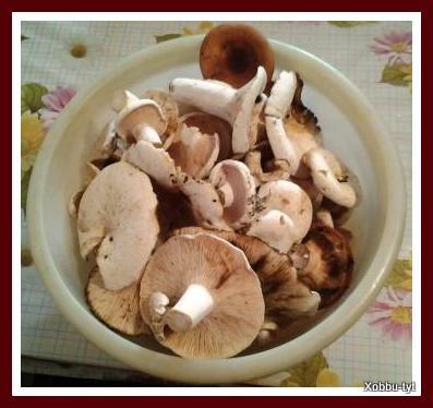 какие грибы в июле в подмосковье 6