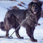 взять собаку из приюта в москве бесплатно