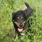 взять собаку из приюта в москве бесплатно 7