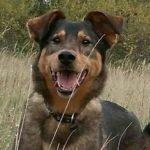 взять собаку из приюта в москве бесплатно 33