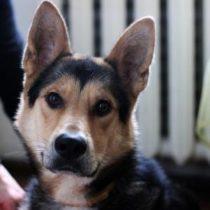 взять собаку из приюта в москве бесплатно 13