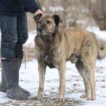 взять собаку из приюта в москве бесплатно 14