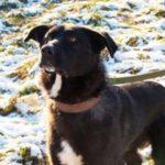 взять собаку из приюта в москве бесплатно 19