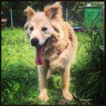 взять собаку из приюта в москве бесплатно 25