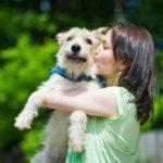 взять собаку из приюта в москве бесплатно 27