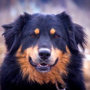 где можно взять собаку бесплатно