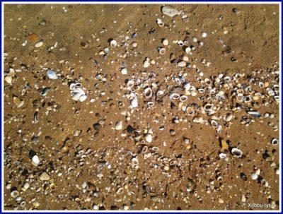 отдых на азовском море летом отзыв 3