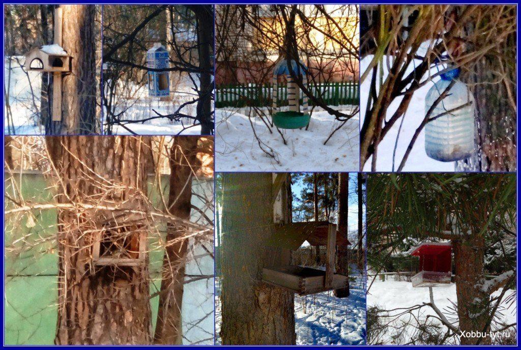 зачем кормить птиц зимой 6