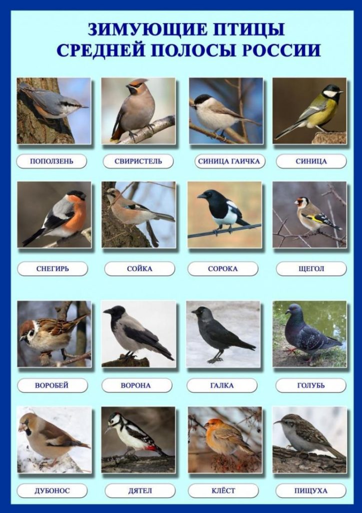 зачем кормить птиц зимой 3