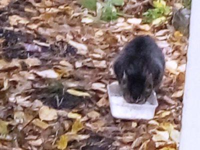 Бездомные животные - проблема каждого из нас 2