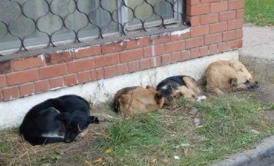 Бездомные животные - проблема каждого из нас
