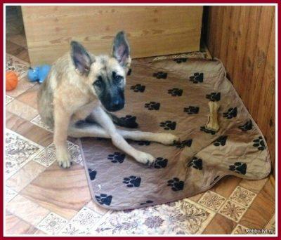 отзыв о впитывающей многоразовой пеленке для собак 2