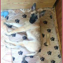 отзыв о впитывающей многоразовой пеленке для собак 11