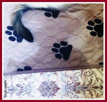 отзыв о впитывающей многоразовой пеленке для собак 4