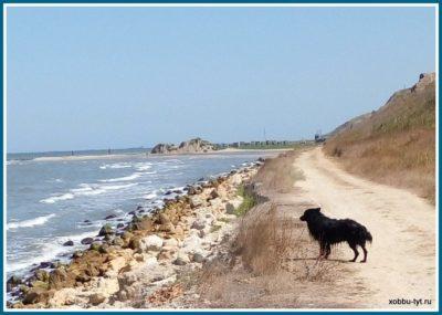 отдых на море с собакой 2018