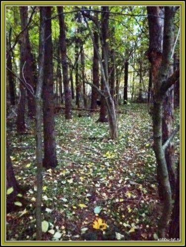 что делать в лесу в октябре