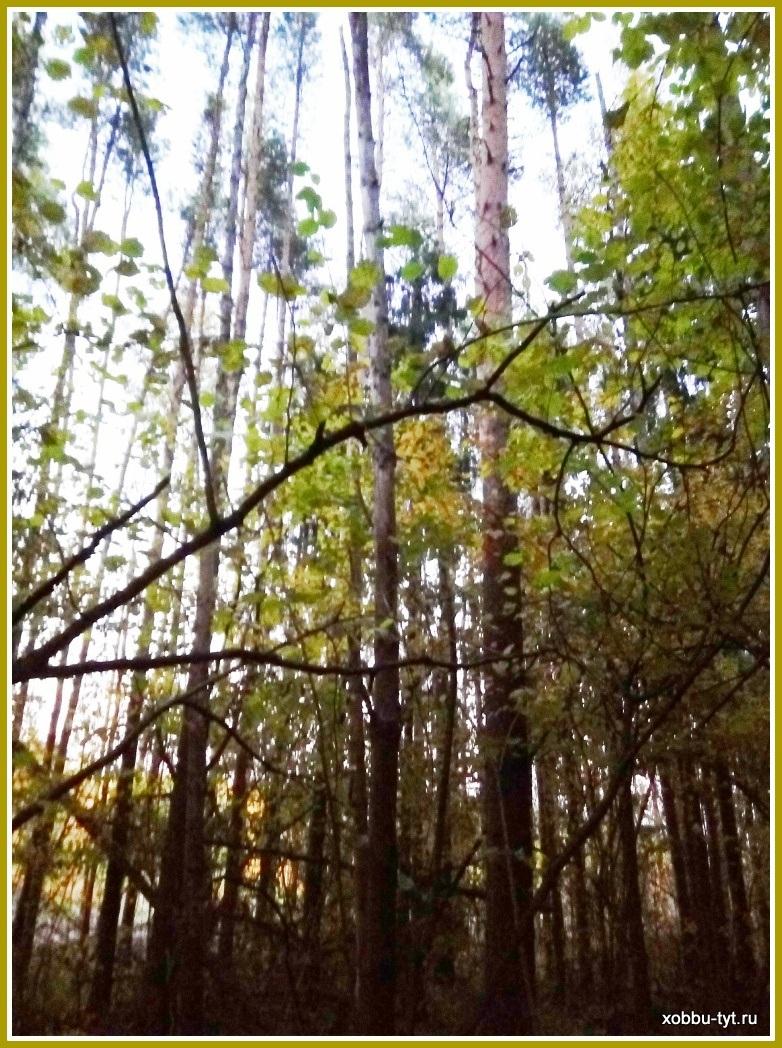 что делать в лесу в октябре 7