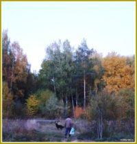 что делать в лесу в октябре 5