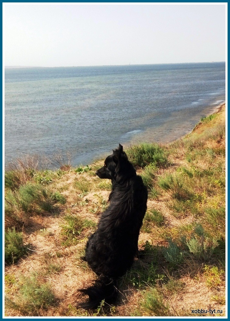 отдых на море с собакой 2018-1